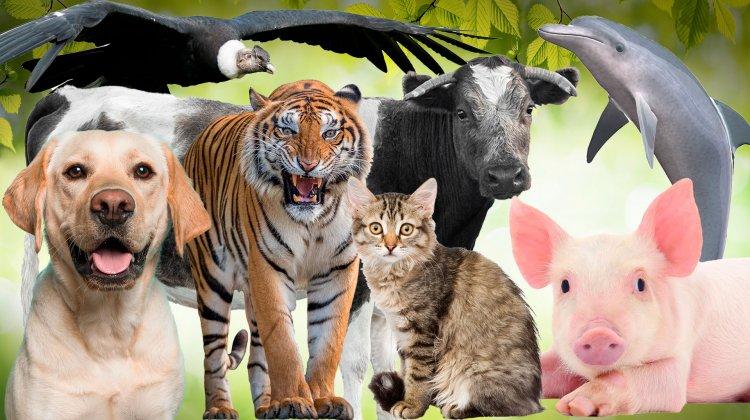 """Feria de ciencias de salita de 4 E señorita Sue Luco """"Mis amigos los animales"""""""